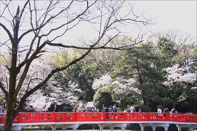 2019年の花見_02.JPG