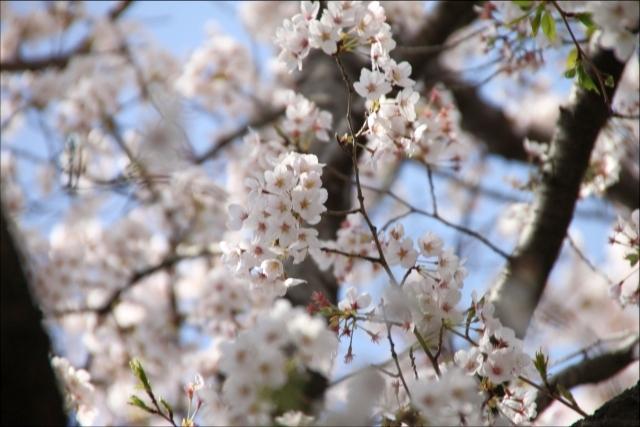 2019年の花見_05.JPG