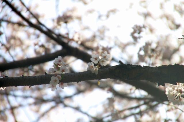 2019年の花見_07.JPG
